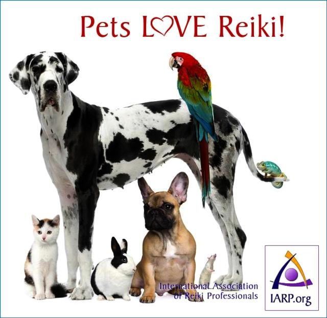 pets-love-reiki